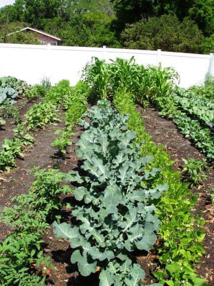 035-Resident-Share-Garden