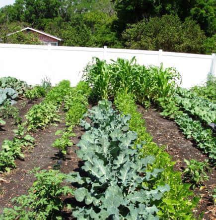 Resident Share Garden